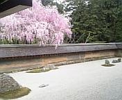 京都旅行・その3 <br />  龍安寺